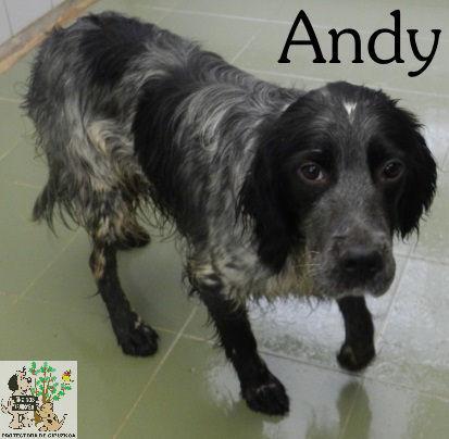ANDY – ADOPTADO