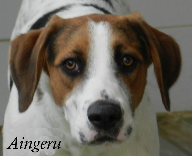 Aingeru – ADOPTADO