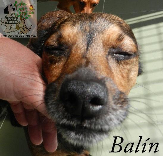 Balín – ADOPTADO