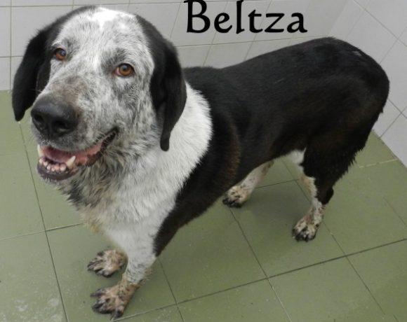 Beltza – ADOPTADO