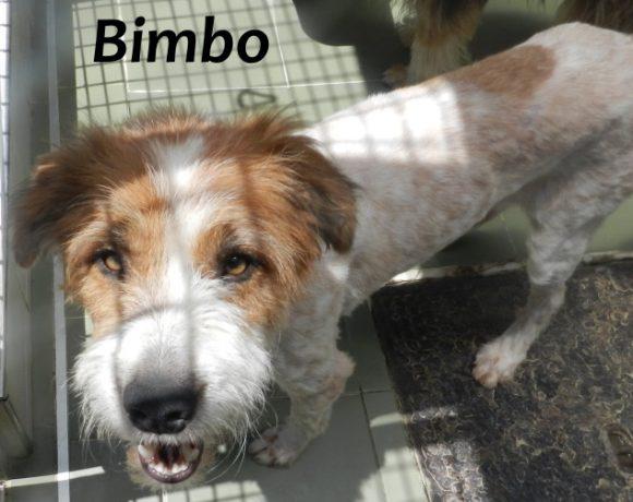 Bimbo – ADOPTADO