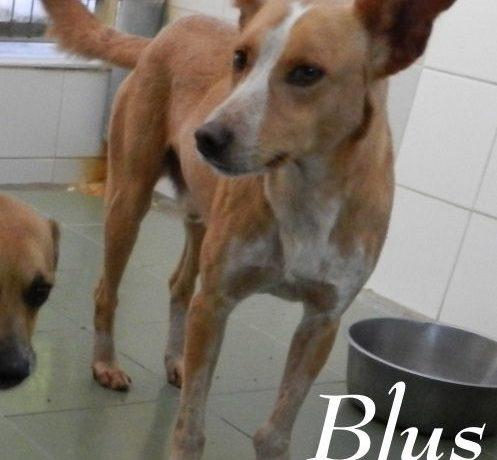 Blus – ADOPTADO