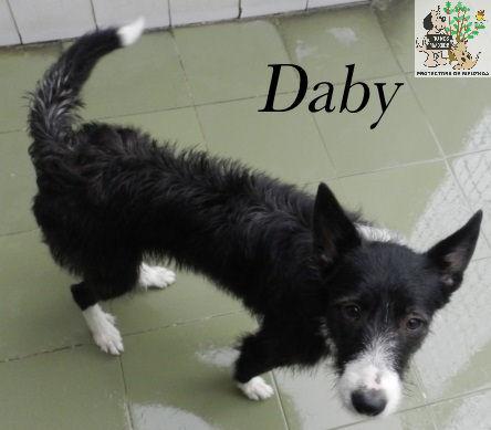 DABY