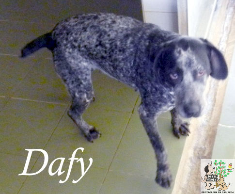 Dafy – ADOPTADA
