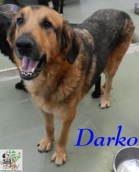 Darko – ADOPTADO