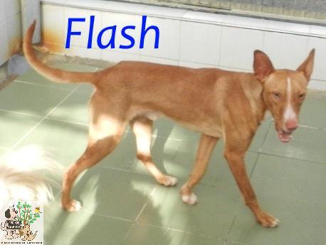 Flash – ADOPTADO