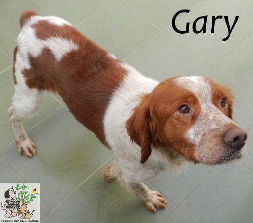 Gary – ADOPTADO