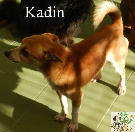 Kadin – ADOPTADO