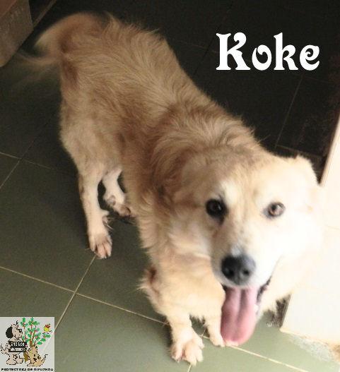 Koke – ADOPTADO