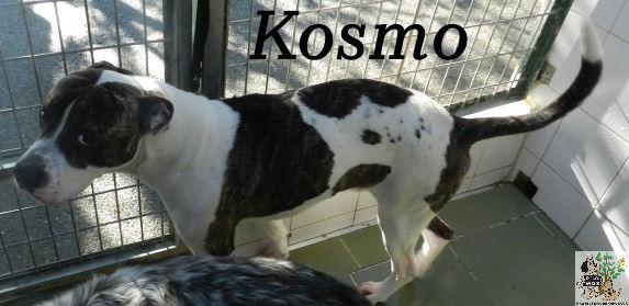 Kosmo – ADOPTADO