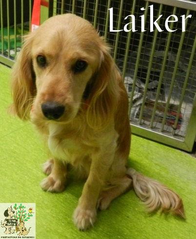 Laiker – ADOPTADO