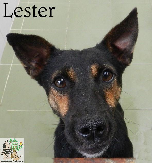 Lester – ADOPTADO