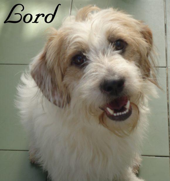 Lord – ADOPTADO