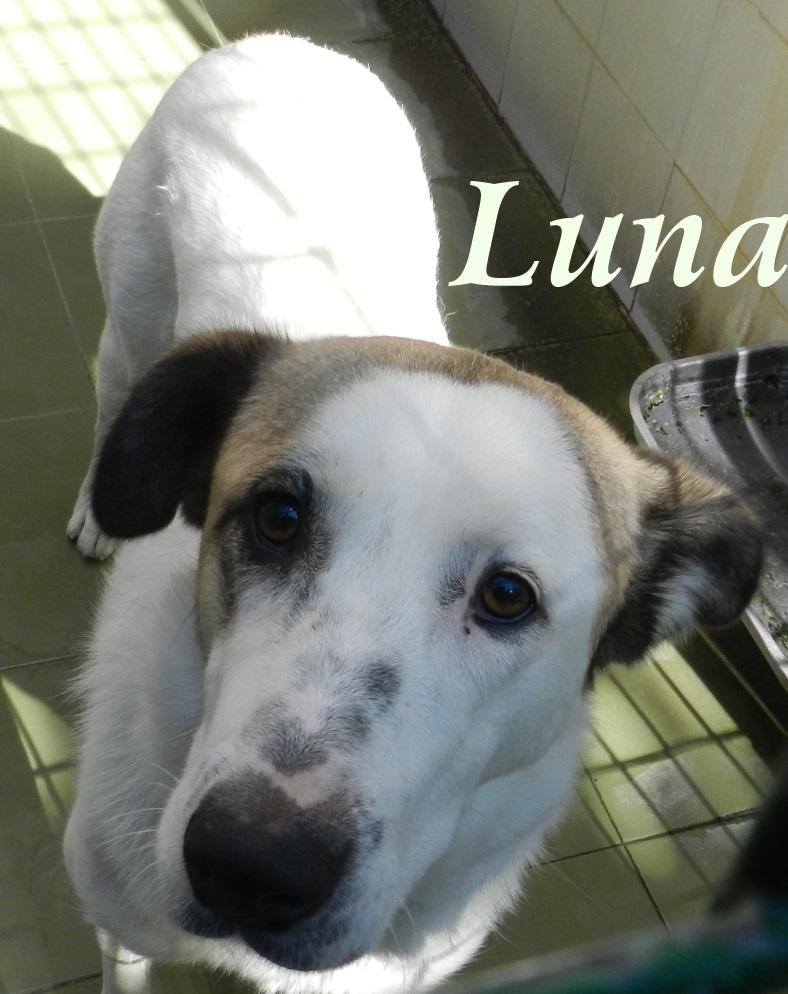 Luna – ADOPTADA