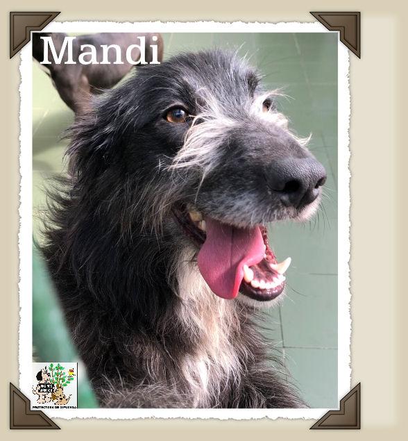 Mandy – ADOPTADA