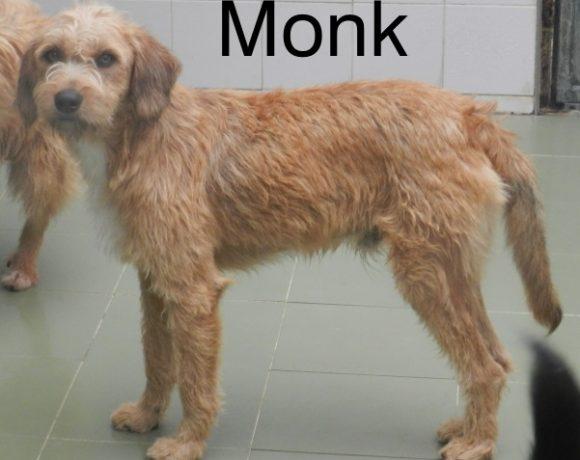 Monk – ADOPTADO