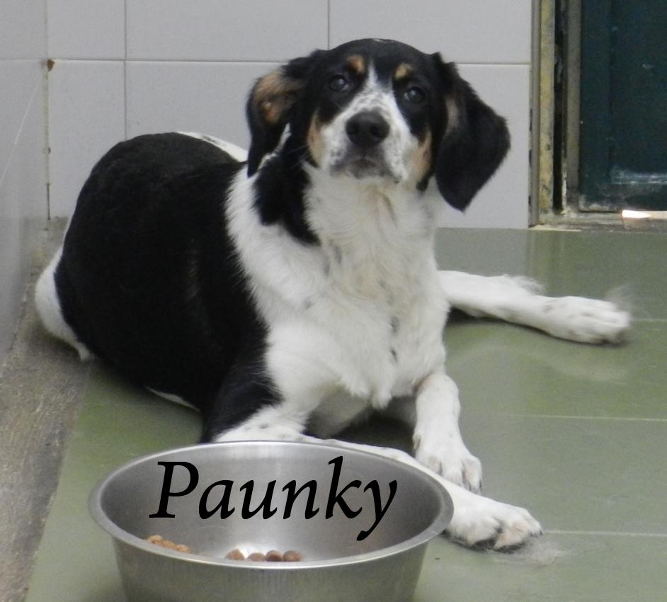 Paunky – ADOPTADA