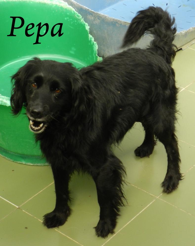 Pepa – ADOPTADA