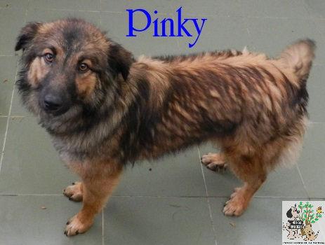 Pinky – ADOPTADA