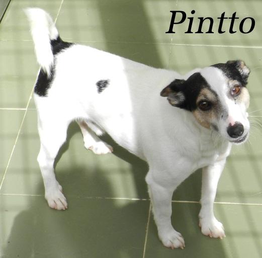 PINTTO