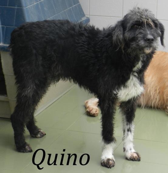 Quino – ADOPTADO