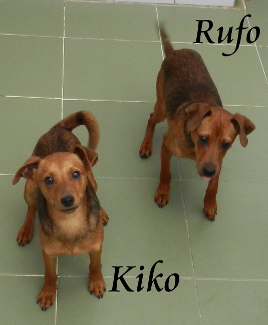 KIKO  y  RUFO