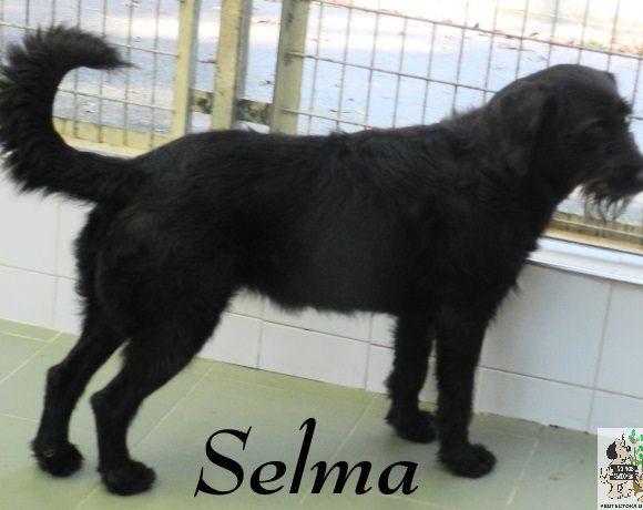 Selma – ADOPTADA