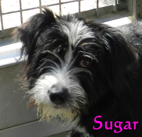 Sugar – ADOPTADA