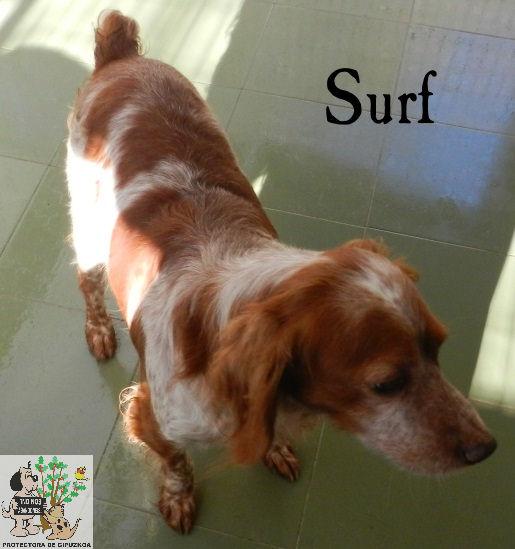 Surf – ADOPTADO