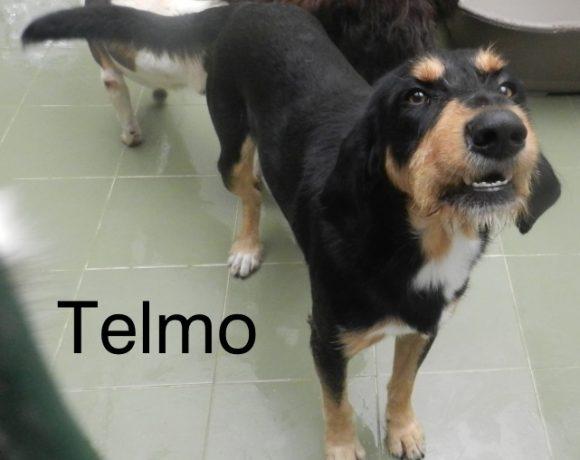 Telmo – ADOPTADO