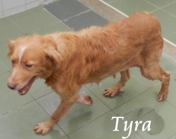 Tyra – ADOPTADA