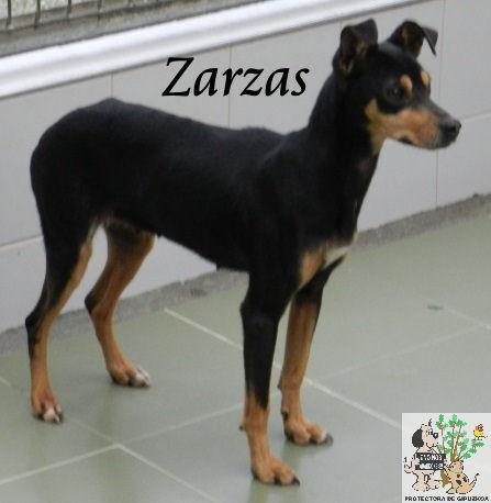 Zarzas – ADOPTADA