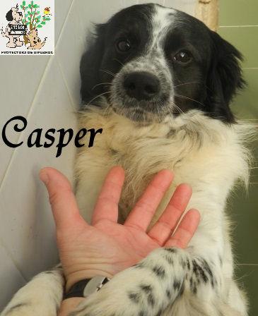 Casper – ADOPTADO