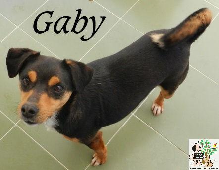 Gaby – ADOPTADO