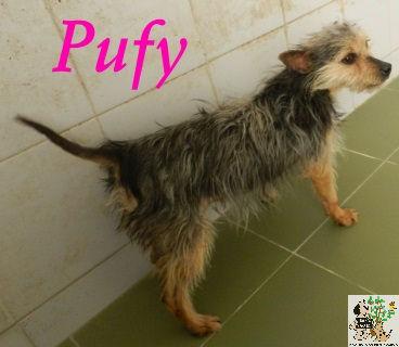 Pufy – EN ACOGIDA
