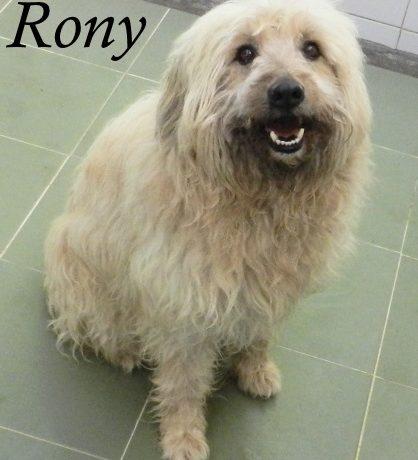 Rony – ADOPTADO