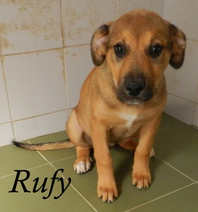 Rufy – ADOPTADA