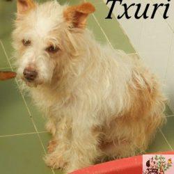 TXURI