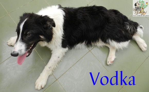 Vodka – ADOPTADO