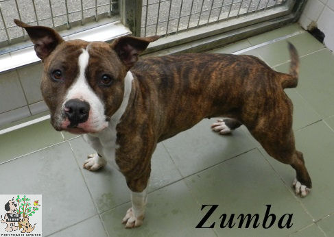 Zumba – ADOPTADA