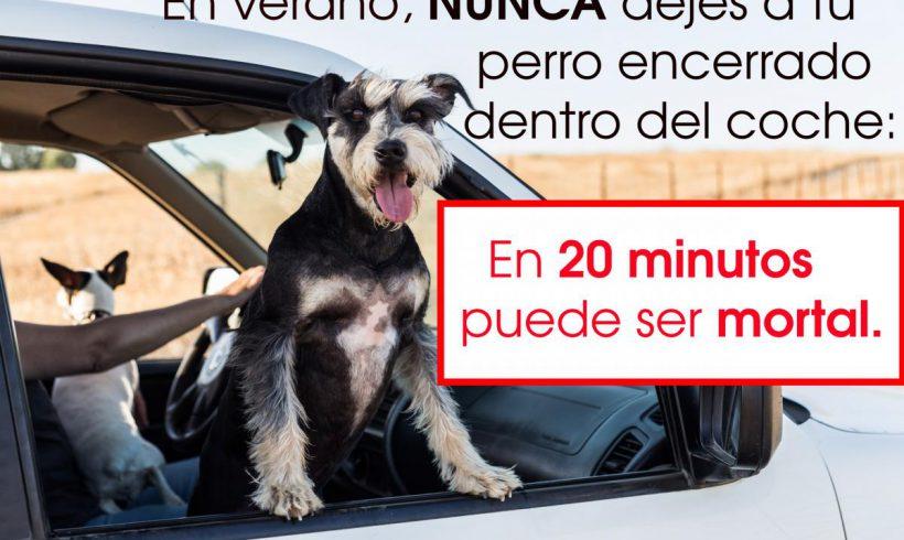 (Español) Precaución  en  verano