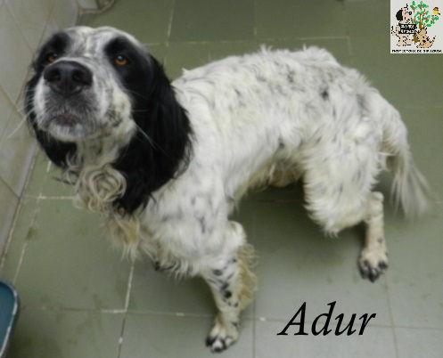 Adour – ADOPTADO