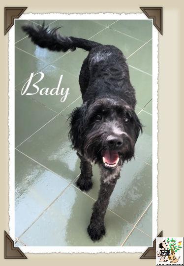 Bady – ADOPTADO