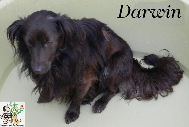 Darwin – ADOPTADO