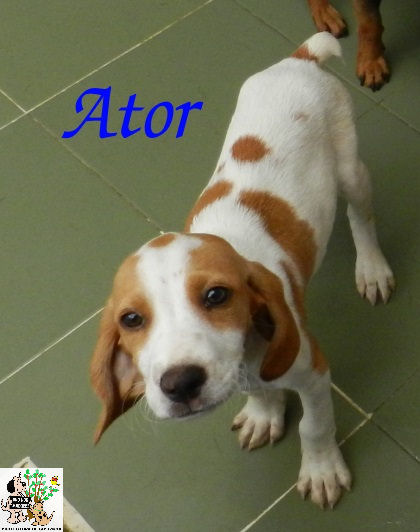 Ator – ADOPTADO