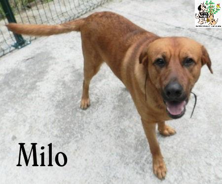 (Español) MILO