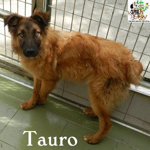 (Español) TAURO