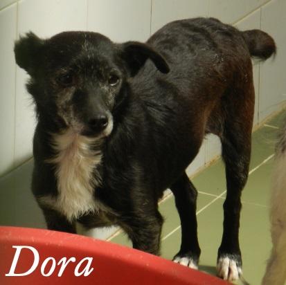 Dora – ADOPTADA