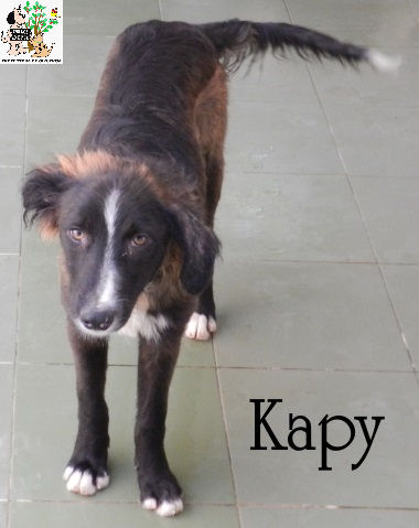 Kapy – ADOPTADO