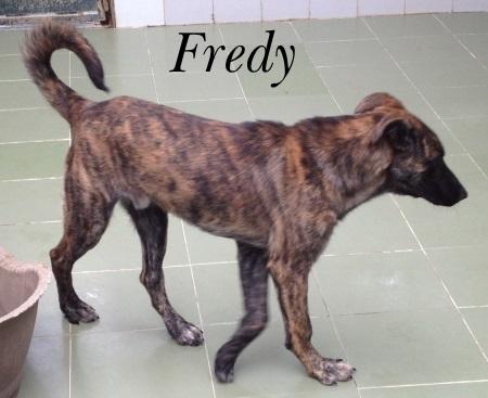 Fredy – ADOPTADO